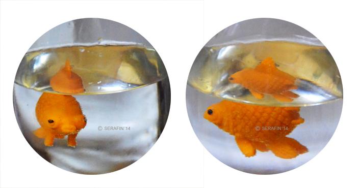 goldfish-www