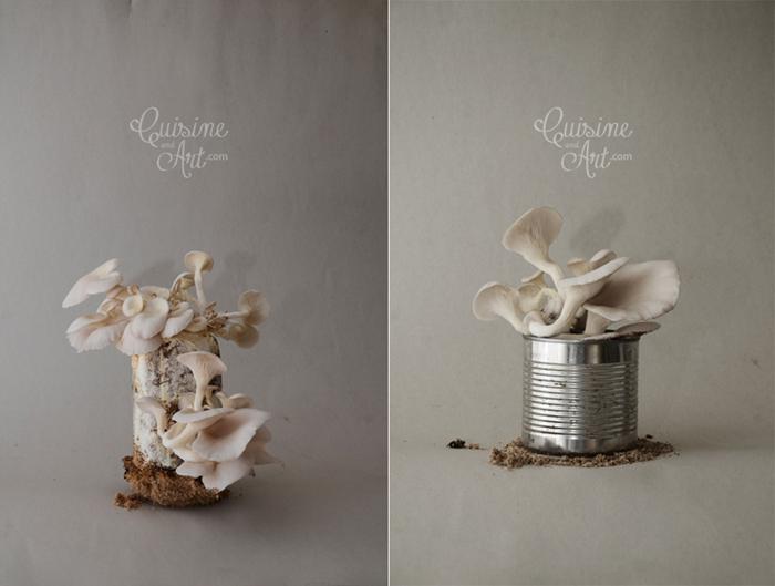 mashrooms-dyptych-www-logo