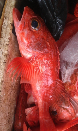 Cuisine And Art untitled red snapper